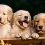 Thuốc trị giun sán cho Chó – Cách phòng tránh và chữa hiệu quả